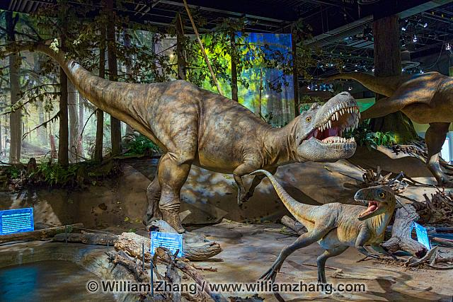 Dinosaurs with muscle and flesh remade at Royal Tyrrell Museum