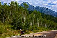 Cyclists along Bow Valley Parkway. Banff, Alberta, Canada