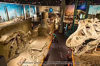 Humans dwarfed by size of dinosaurs at Royal Tyrrell Museum