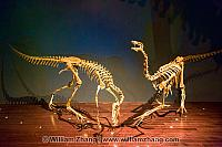 Two dinosaurs posed at Royal Tyrrell Museum. Drumheller