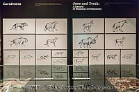 Chart about animal jaws and teeth at Royal Tyrrell Museum