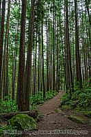 Trees and trail in Lynn Canyon, North Vancouver. BC, Canada