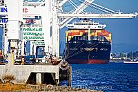 Containers on ship at terminal with cranes ready. Oakland, CA